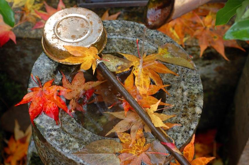 Fountain and red momiji leaves, Photo Tour to Japan