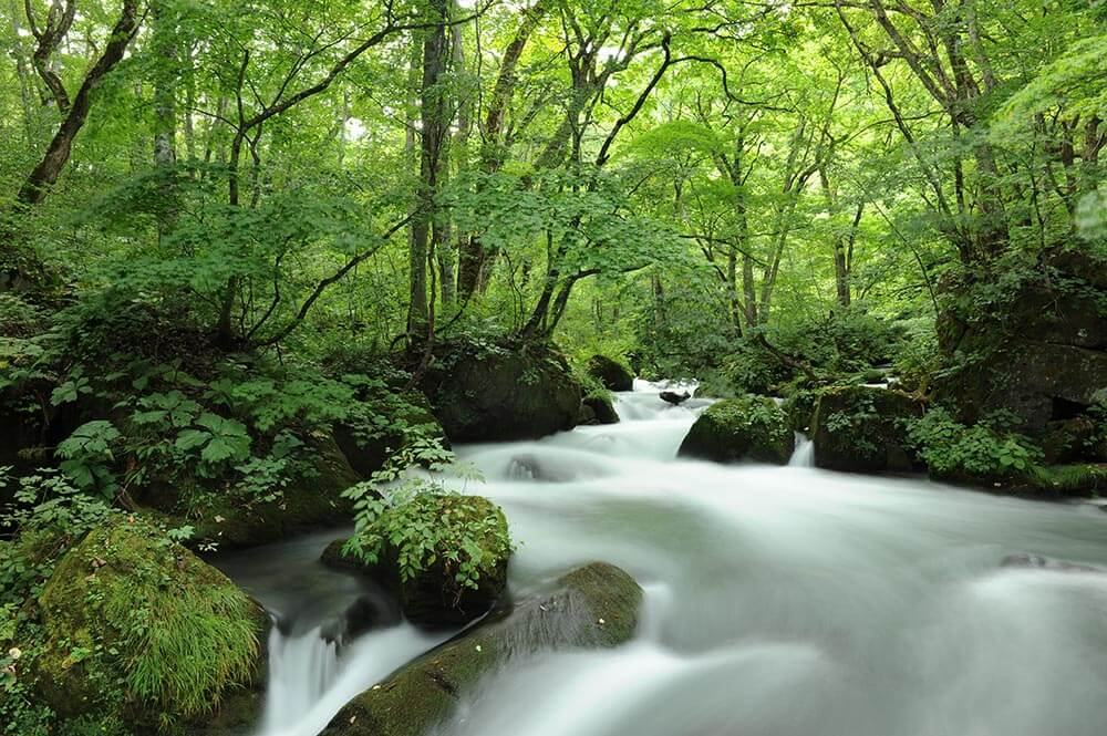 Oirase river is next to Towada lake in Tohoku, photo tour to Japan
