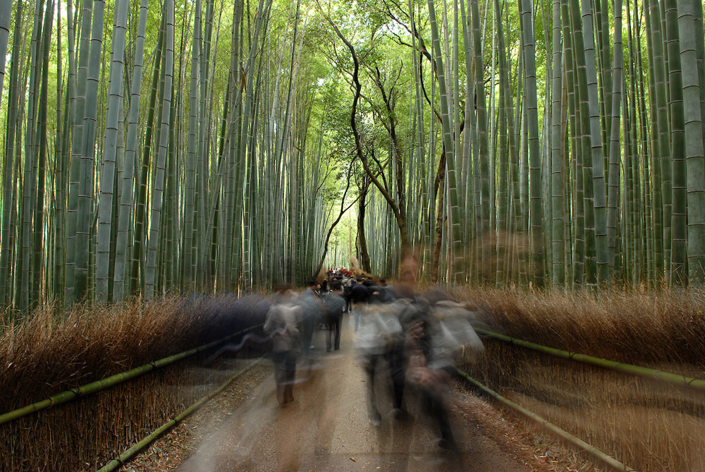 Arashiyama Bamboo Forest with tourists