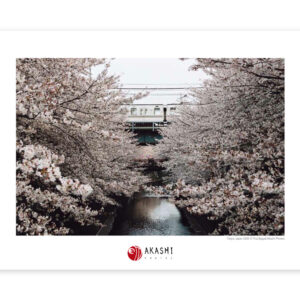 Cherry blossom over Meguro river in the center of Tokyo