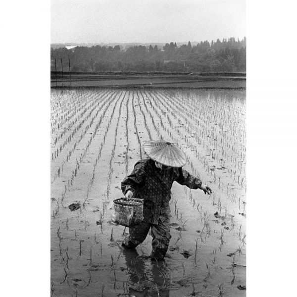 Woman planting rice in a traditional way in Nigata
