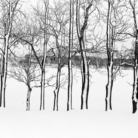 trees covered with snow in Biei Hokkaido